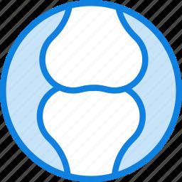 articular, cartilage, health, healthcare, medical icon