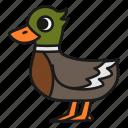 animal, bird, duck, rubber duck, wild, zoo icon