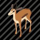 beautiful, bone, deer, gazelle, isometric, logo, object