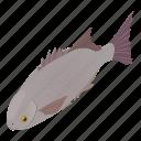 fish, fishing, isometric, logo, object, ocean, wildlife