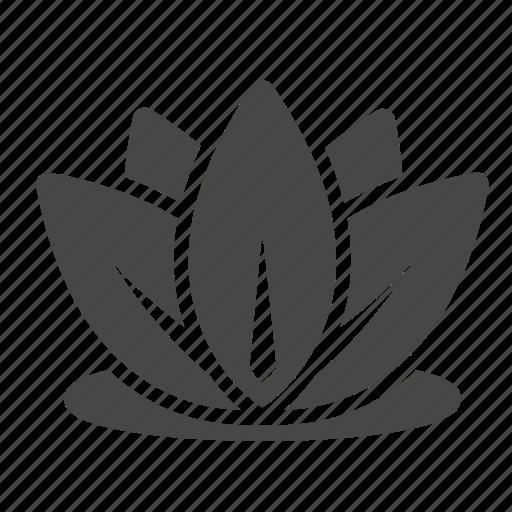 leaves, plant, spa icon