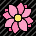 flower, massage, relax, spa
