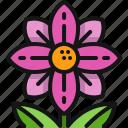 flower, garden, bloom, blossom, floral
