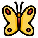 animal, butterfly, fly, insect