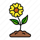 plant, spring, flower, anemone icon