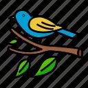 bird, british, small, sparrow, spring