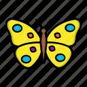 bug, butterfly, garden, nature, spring