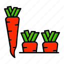 carrot, healthy, root, spring, vegetable