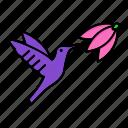 flower, fly, hummingbird, spring, wings