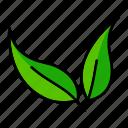 ecology, leaf, leaves, nature, spring