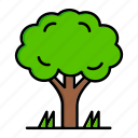 ecology, forest, nature, tree, wood
