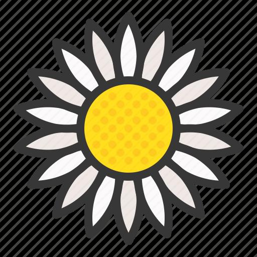 flora, floral, flower, nature, spring, sunflower icon