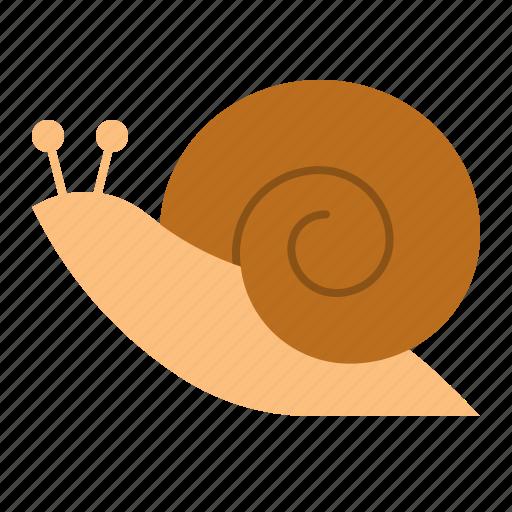 animal, nature, snail, spring icon