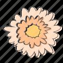 daisy, floral, flower, gerbera, nature, ornament, plant