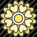 blossom, cosmos, daisy, flower, lavatera, nature, spring