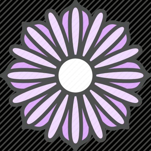 blossom, cosmos, daisy, flower, nature, spring icon