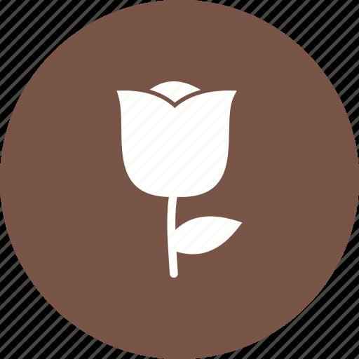 Blossom, flower, garden, petals, plant, rose, spring icon - Download on Iconfinder