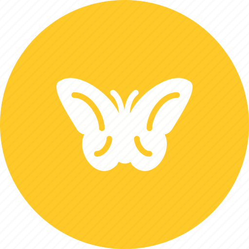 Butterfly, garden, beauty, nature, spring, flying, butterflies icon