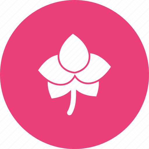 beautiful, floral, flower, orchid, pink, purple, spring icon