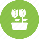 decoration, garden, nature, plant, pot, spring, tulips icon