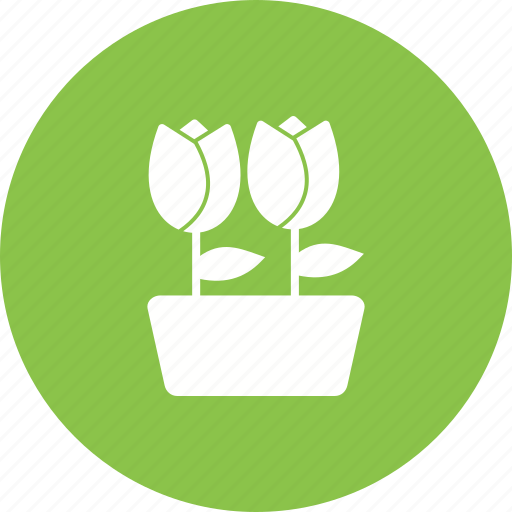 Plant, garden, nature, spring, pot, decoration, tulips icon - Download