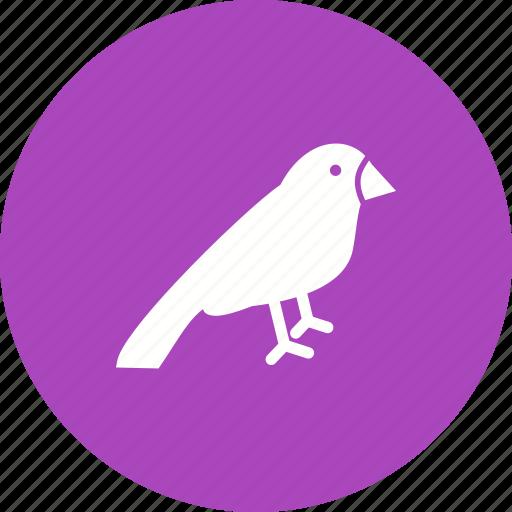 animal, bird, birdhouse, branch, brown, sparrow, spring icon