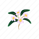 beauty, blossom, cartoon, flower, nature, plumeria, tropical icon
