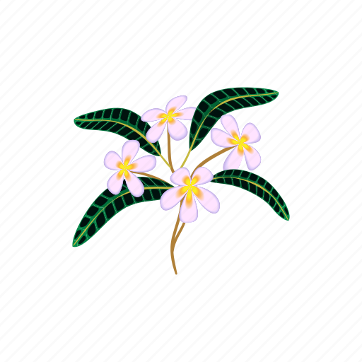 Beauty, blossom, cartoon, flower, nature, plumeria, tropical icon - Download on Iconfinder