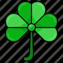shamrock, st patricks day, irish, ireland, leaf, plant