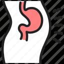 stomach, bloating, body, anatomy