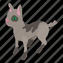 cat, hungry, isometric, kitten, object, pet, street