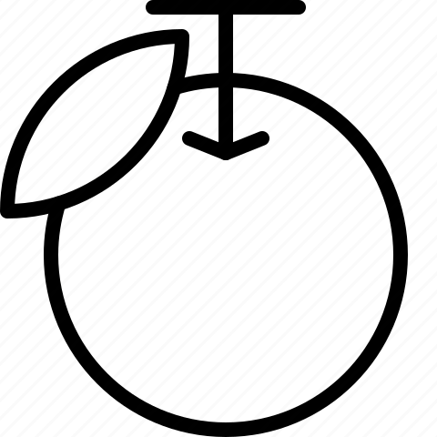 fruit, line, orange icon