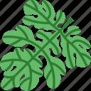 green, leave, summer, watermelon
