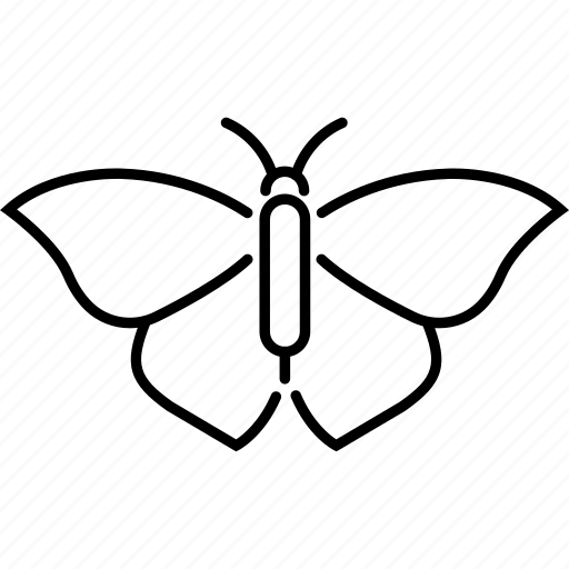 Butterfly, flight, insect, moth icon - Download on Iconfinder