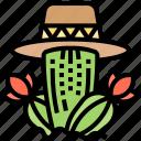 cactus, plant, decoration, garden, nature