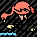 flamingo, bird, animal, wildlife, tropical