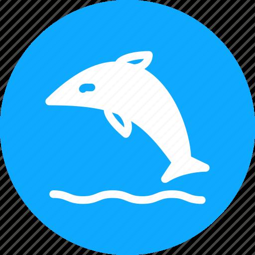 beluga, dolphin, fish, sea icon