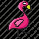 bahas, bird, exotic bird, flamingo, fowl, phoenicopteridae
