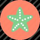 asteroidea, fish, sea animal, sea star, starfish