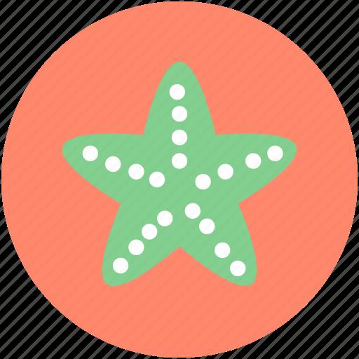 asteroidea, fish, sea animal, sea star, starfish icon