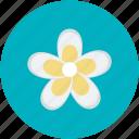 daisy, daisy flower, flower, beauty, nature