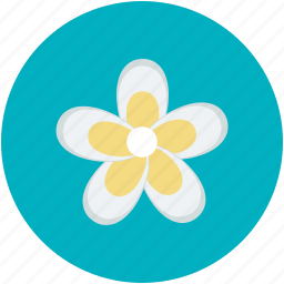 beauty, daisy, daisy flower, flower, nature icon