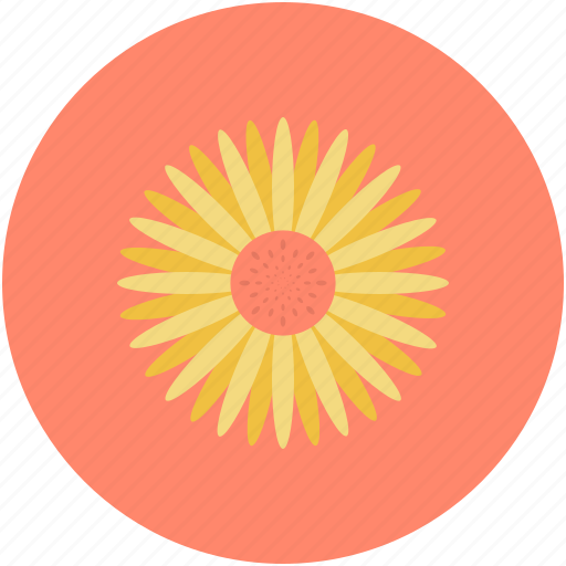 beauty, decorative flower, flower, nature, sunflower icon