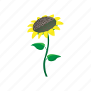 cartoon, floral, flower, nature, plant, spring, sunflower icon