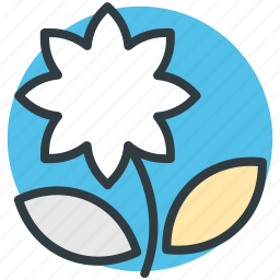bloom, blooming, blossom, flower, macro flower icon