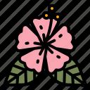 flower, hibiscus, hawaiian, summer, cultures