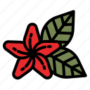 flower, hawaii, flowers, tropical, cultures