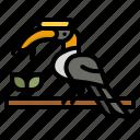 hornbill, bird, entertainment, feather, zoo