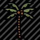 palm, tree, oasis, island, tropical