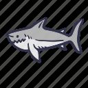 animal, fish, sea, shark, summer, wild icon